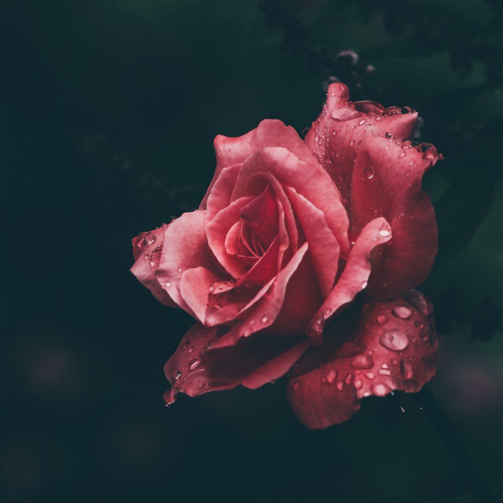 4. Kvetinové vody